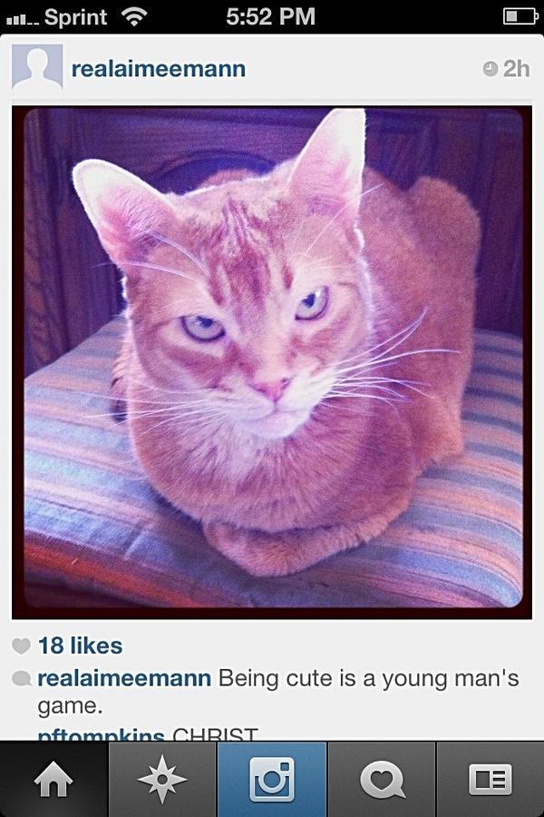 Aimee Mann Cat