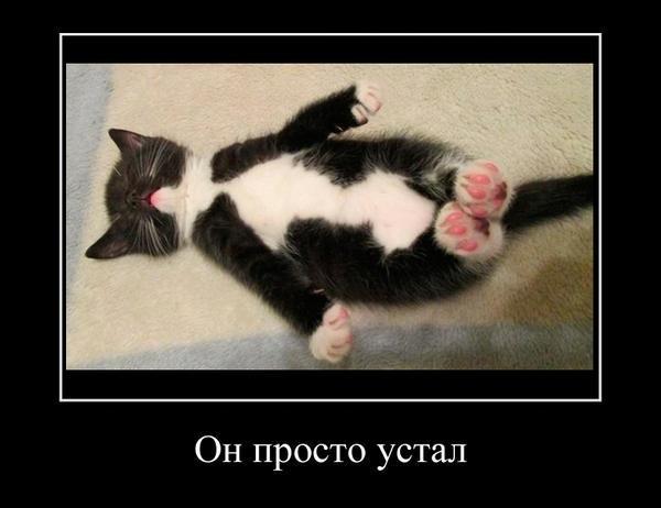 Смешные картинки когда ты устал