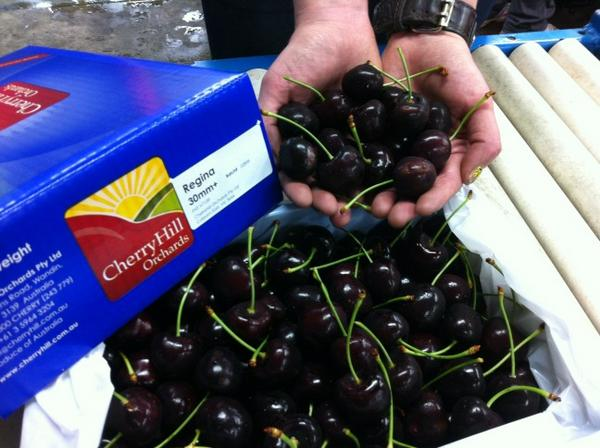 This years finest #cherries ready in time for Christmas http://t.co/MxaAotuE