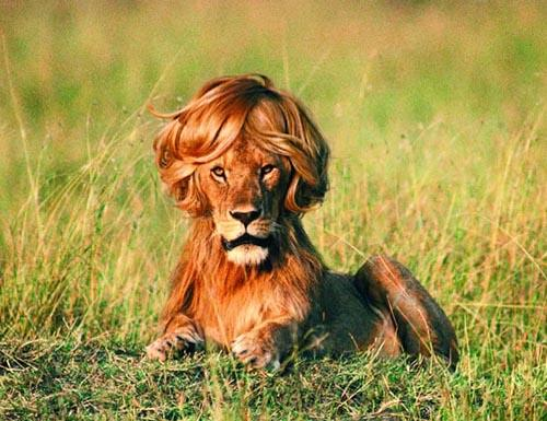 Essex Police issue first picture of missing #EssexLion http://t.co/Rc6qMFJ9