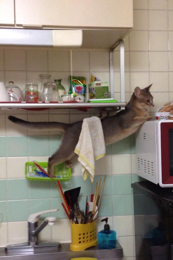 """たしゅけて~ """"@moribon06: キッチンで奇怪なおとがする、、と思ったらこの状態でぷるぷるしてた http://t.co/1hOxbobt"""""""