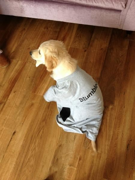 StumbleUpon Tshirt on my Puppy