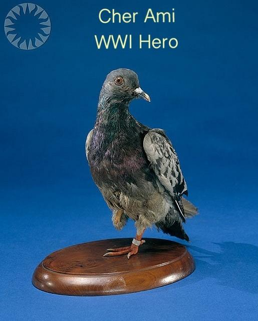 جندي بالحرب العالمية الأولى أنقذ