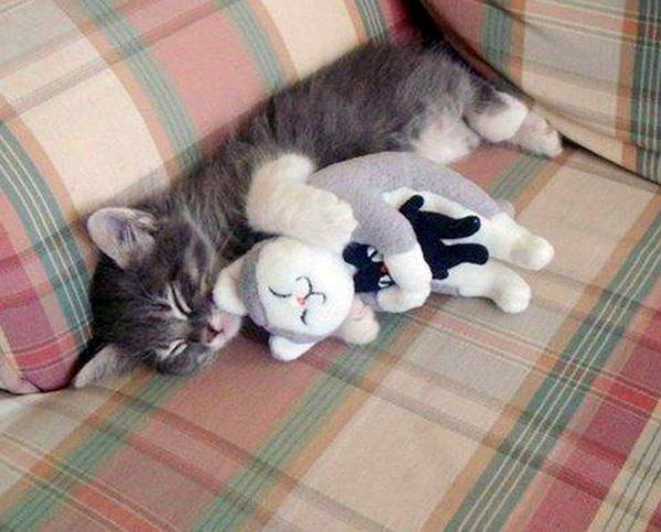 how to make a cat sleep instantly