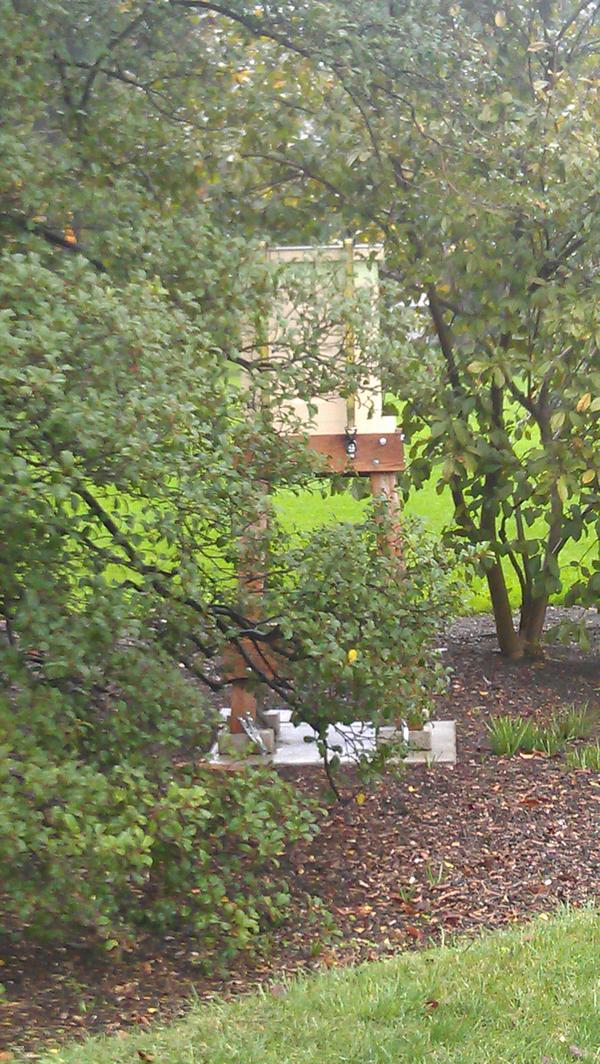#whgarden Bill Yossis WH Pastry Chef's favorite part of the White House garden is the beehive ...mmm honey :) http://pic.twitter.com/zflVT73E