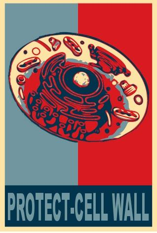 Protect! Vote Cell Wall 2012! http://pic.twitter.com/CUByKg3E