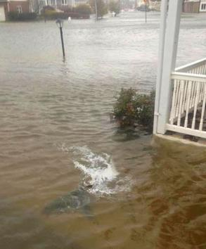 A shark was photographed swimming in the front yard of a flooded home in Brigantine Beach, New Jersey #sandy pic: http://pic.twitter.com/EryjeqUE