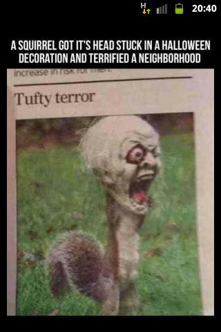 Squirrel Gets Head Stuck In Halloween Decoration Hallowen Costum Udaf