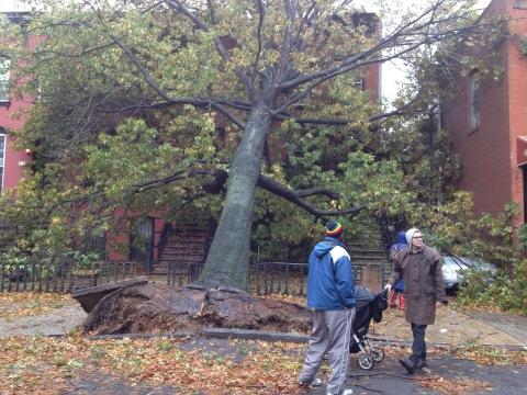 PHOTO of Fallen Tree in Prospect Heights Brooklyn. Woman trapped inside home according to neighbors. http://pic.twitter.com/oOKRybOu