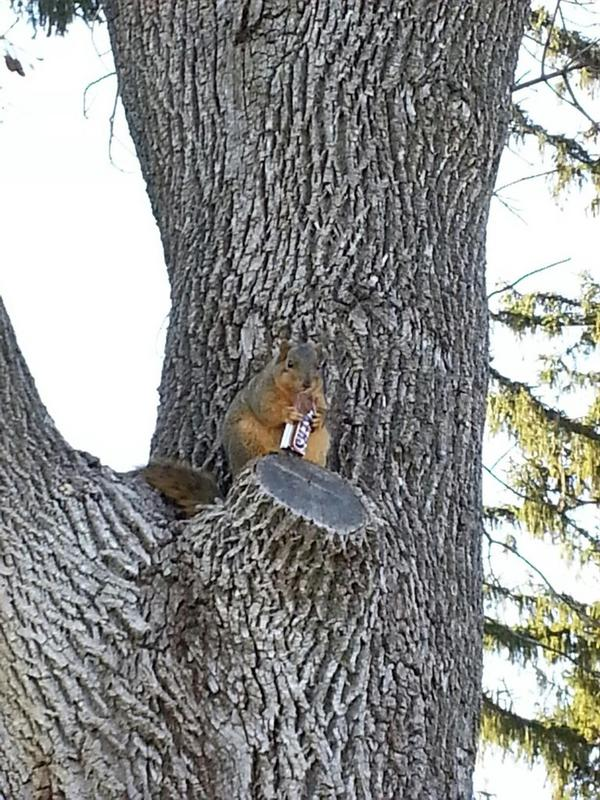 You 100% Need These Pictures Of Squirrels Eating Random Things