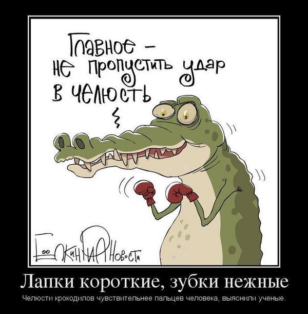 Смешные картинки крокодилов с надписями