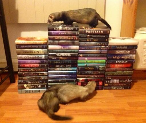 Cute ferrets + books = awesome