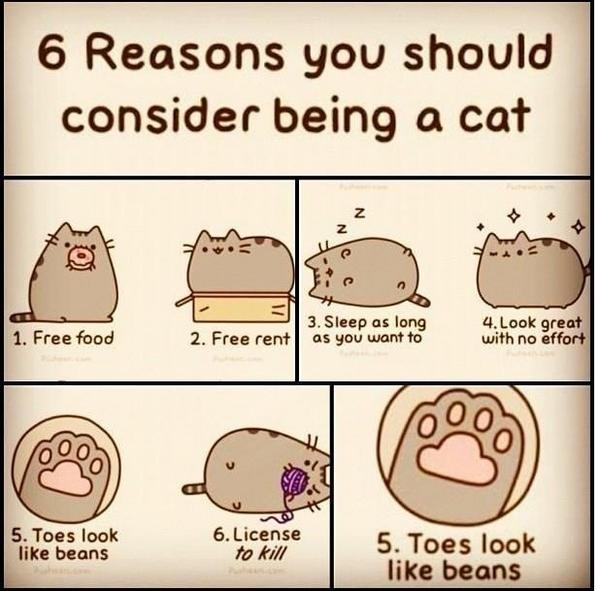 This is why I want to be a cat http://t.co/PuqS53OW