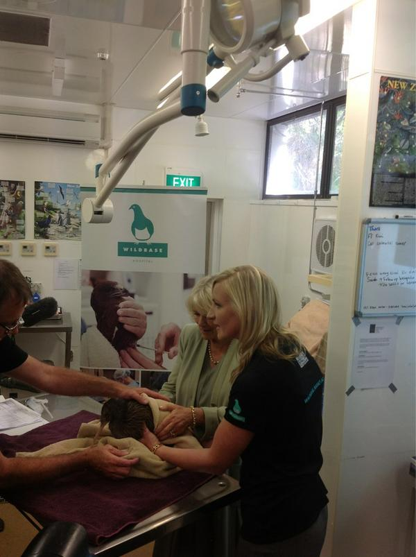 The Duchess of Cornwall gets close to an injured kiwi at Wildbase @Massey_Uni #NZRoyalVisit http://pic.twitter.com/B7ueBLQC