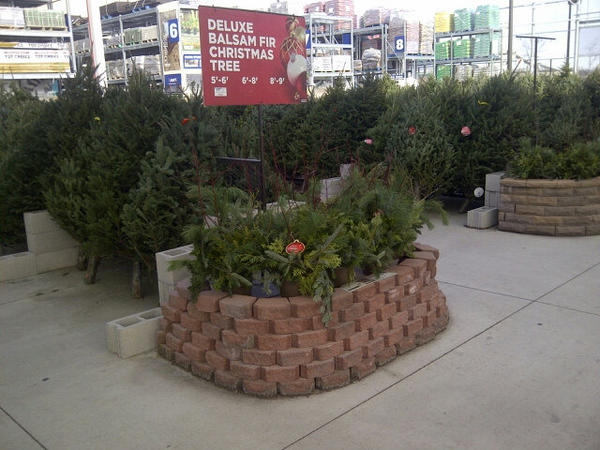 lowes belleville on twitter live christmas trees have arrived stop by today and check them out sizes range from 5 9 lowesfreshfortheholiday - Lowes Live Christmas Trees