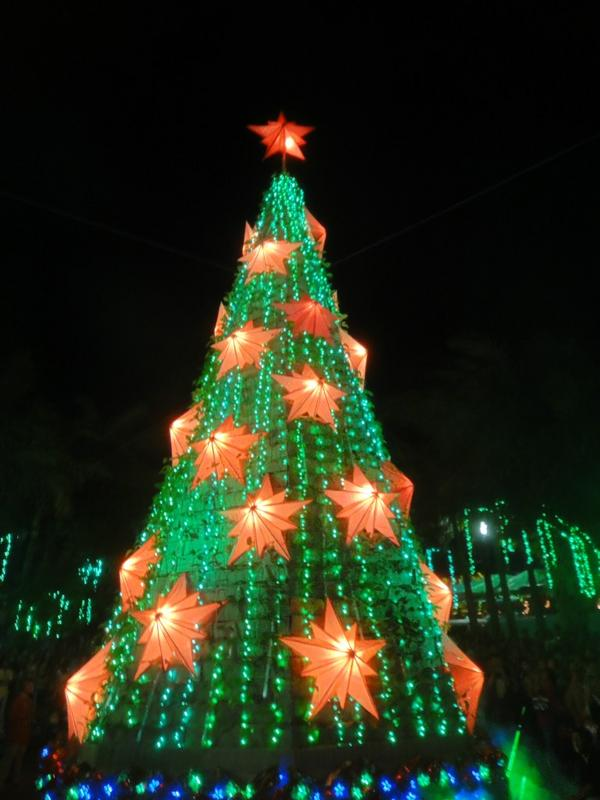 Green Christmas Tree in Albay w/ 5,000 Pili Seedlings! #ItsMoreFunInThePhilippines! Photo by @officialFLOREDy http://t.co/gGEpEvdO