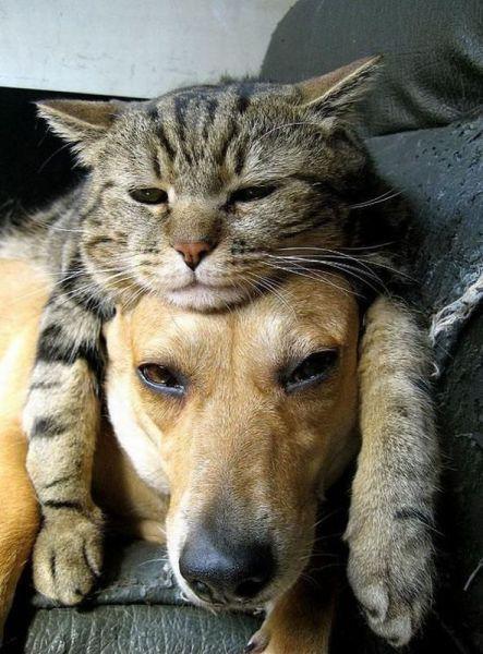 猫にあご置きにされるわんこ pic.twitter.com/IfbBw7f1Bf