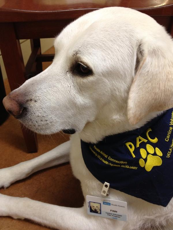 UCLA PAC therapy dog Finn is super sweet. http://pic.twitter.com/ZWaU7Abp