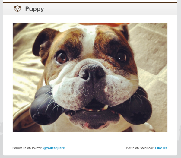Adorable puppies in the Foursquare newsletter