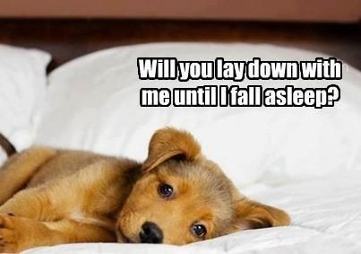 Image result for sweet dreams dog images