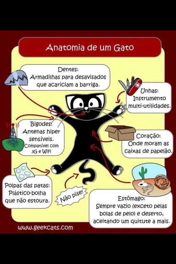 Amantes De Los Gatos (@AmantesDeLosGat) | Twitter