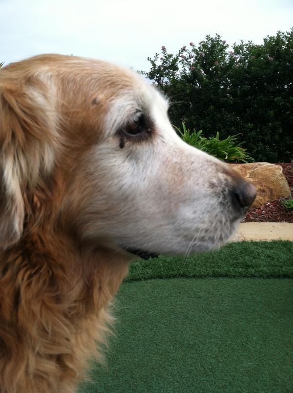 """Erica Lindgren on Twitter: """"My dog has a skin tag by his eye that looks like teardrop tattoo ..."""