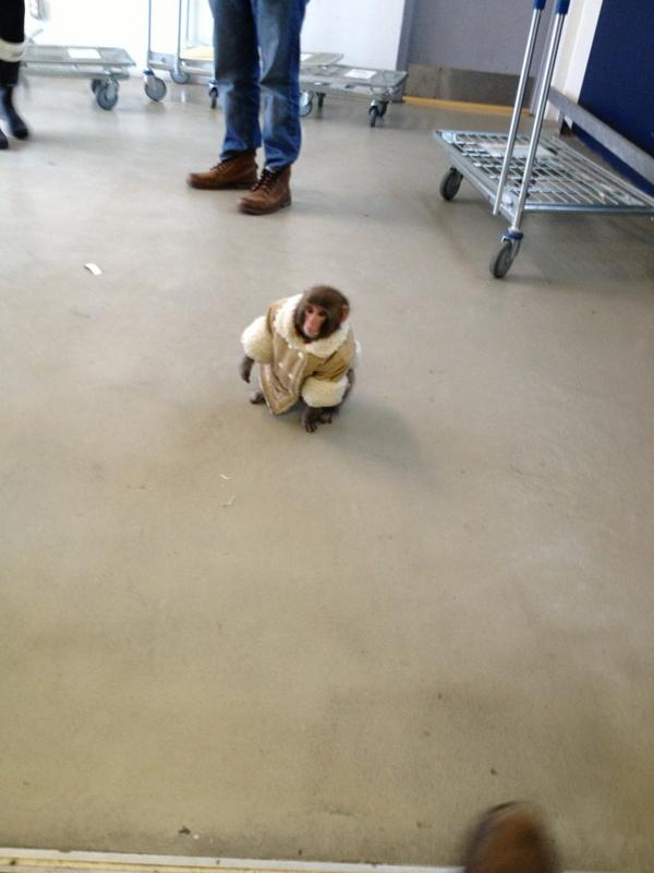 Umm saw a monkey in the #ikea parking lot. http://pic.twitter.com/ZFJdIlQl
