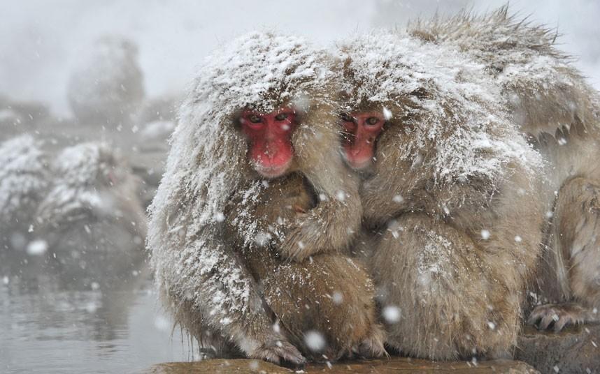 Сделать открытку, смешные картинки зима холодно