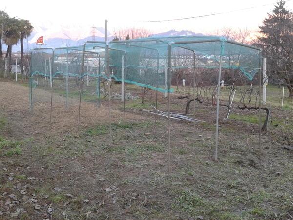 Orto di Mauro, quattro stagioni : Il mio orto - 7