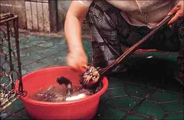 毛皮をはぐ準備をされる猫 「毛皮を剥ぎやすいように、生きたまま熱湯に投げ込まれるケースもある」 という申し立てもあります。主に中国、そして東南アジアでは年間200万匹の犬猫の毛皮がはがされています https://t.co/lx4iKMUEbZ #twitr #neko