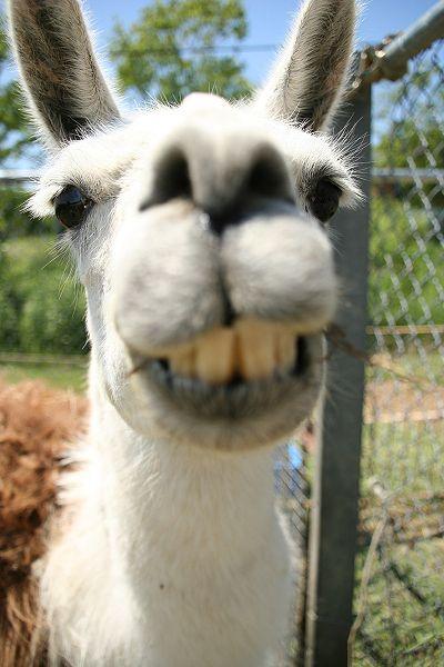 #SmileyLlama :D x