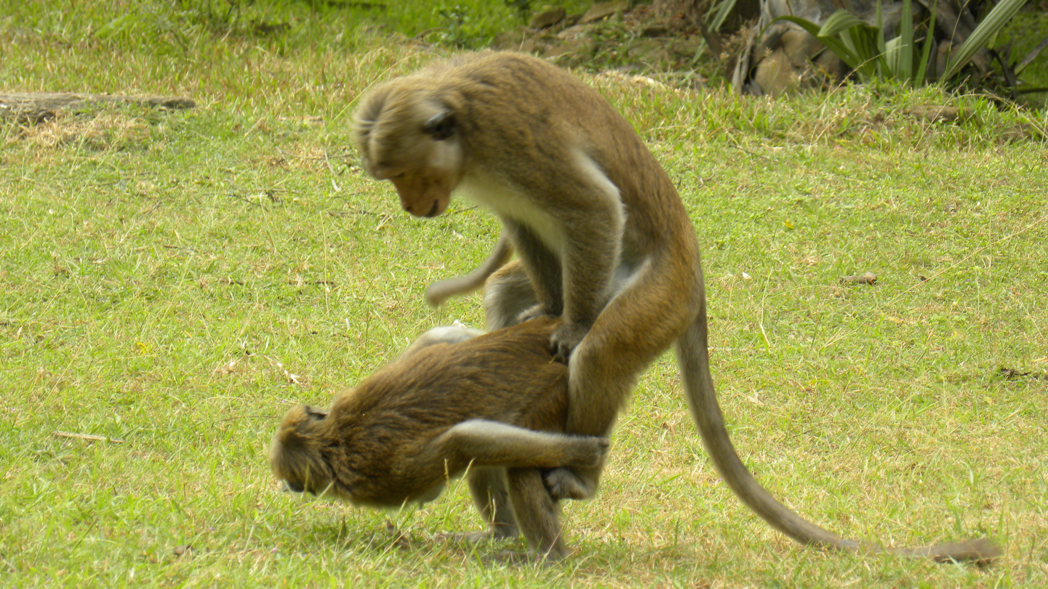 Ed Yong on Twitter: I looked at these monkeys and they