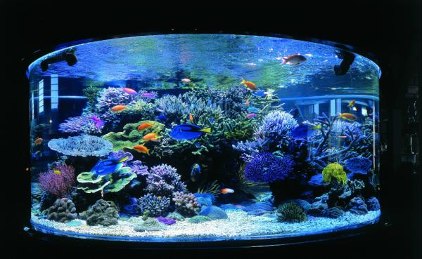 aquarium by amblard bulle do twitter. Black Bedroom Furniture Sets. Home Design Ideas