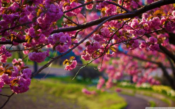 spring wallpaper iphone - HD 3840×2400