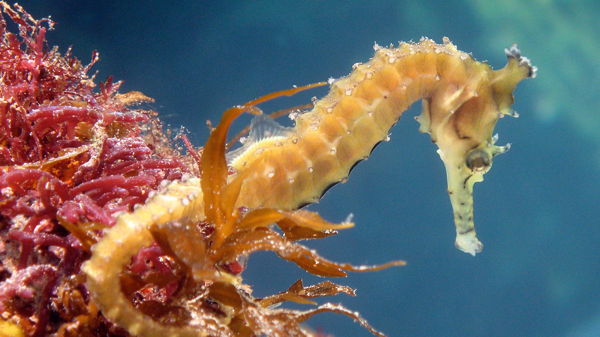 крым морской конек фото белорусские
