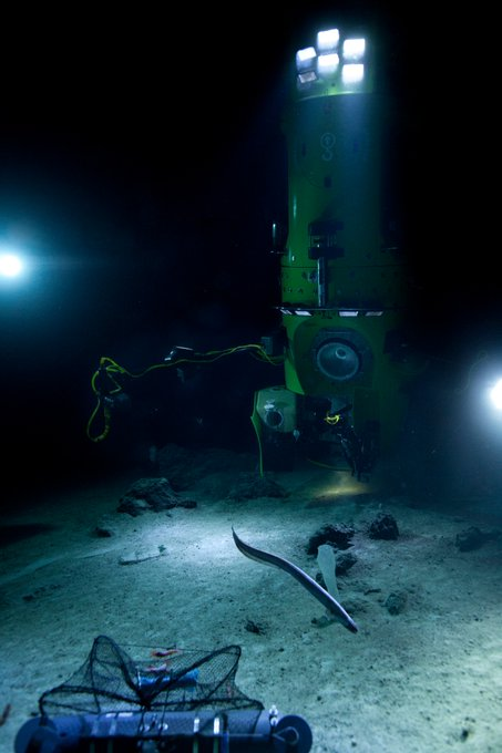 Pic from sub co-designer Ron Allum's recent @DeepChallenge dive- he dove like a champ- to 3,600+ ft #deepseachallenge http://t.co/ASu7x3g8