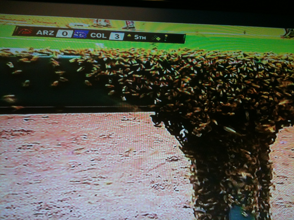Holy bees Batman at Coors Field. http://t.co/fSP206Ok