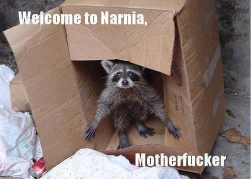 mapache robando