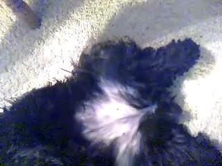 dogpussy