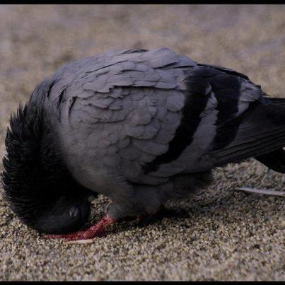 """الله أكبر ♥ on Twitter: """"Kuş Secde Ediyor.... SubhanALLAH....  http://t.co/j9bj3aRN"""""""
