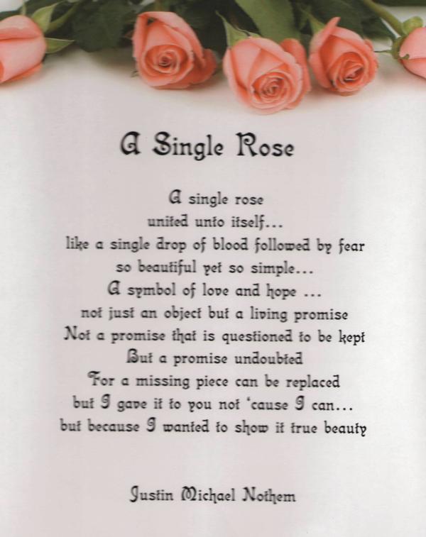 Betty MacDonald Fan Club: Betty MacDonald and beautiful roses