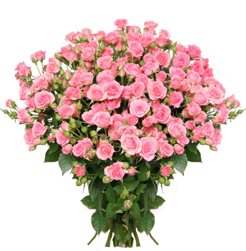 Букеты ромашками, дикая роза букет