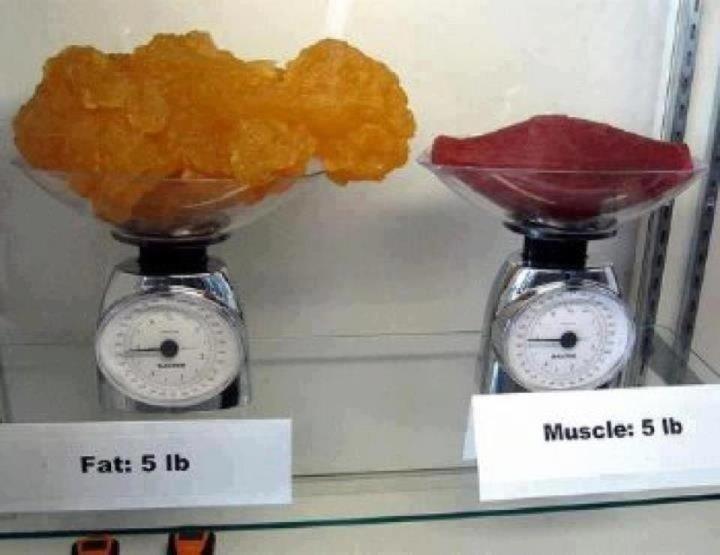 RT @SonitaChavez: RT @NutriTIPS: Así se ven 5 libras de grasa y 5 libras de músculo. #NutriTrips http://t.co/AJt7A2c4