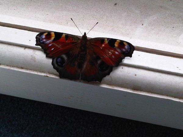 сделать бабочек фото