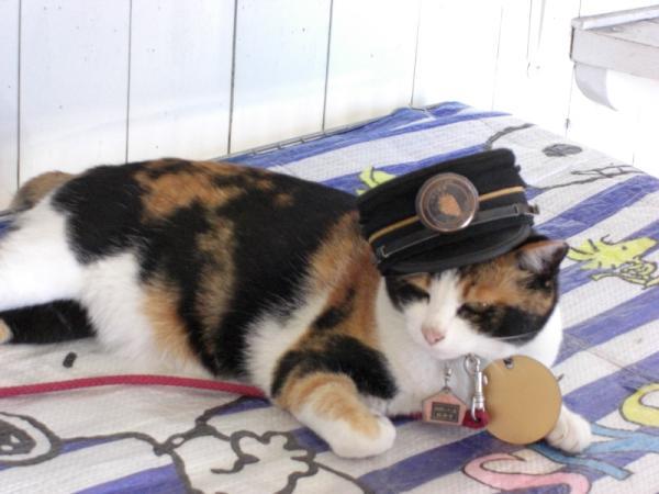猫の「たま駅長」、部下ができても全く働かず
