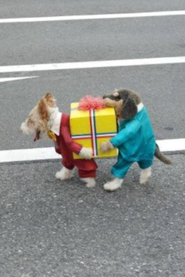 Milton Mermikides on Twitter  Okay stop looking. This is the best dog outfit ever invented. HT @bastardsheep //t.co/WPVQqY4O  & Milton Mermikides on Twitter: