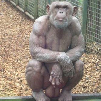 Image result for monkey balls