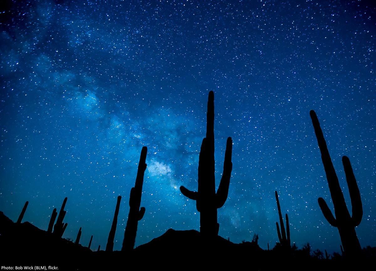 Saguaro cactus and the Milky Way; photo by Bob Wick, U.S. Bureau of Land Management. Via Wilderness Society on Twitter, and flickr.