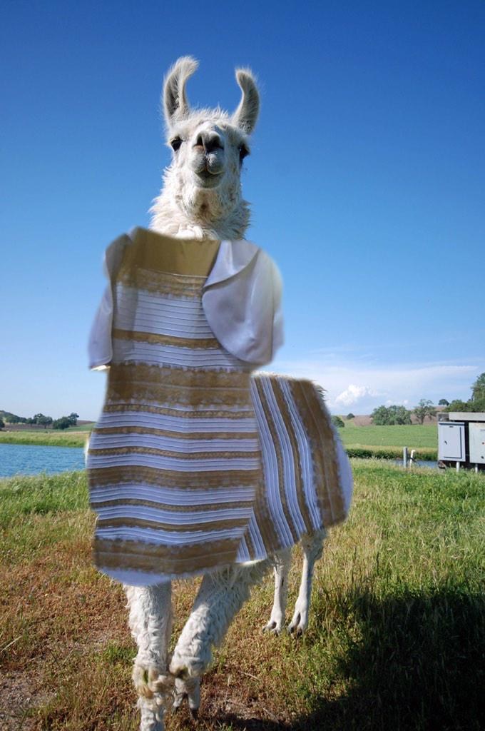 Fine #thedress on #thellama RT @lturrentine: @Jamesco Make it rain, James. You have the aforementioned skillz. http://t.co/H8oJpJ04bf