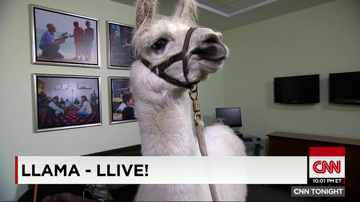 This is CNN – The llama cam